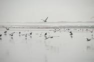 Baie d'Audierne - PF photo perso - DSC_0261