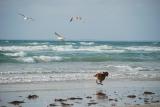 Baie d'Audierne - PF photo perso - DSC_0300