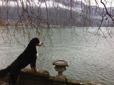 une inquiétante observation, Gracie au lac d'Annecy, novembre 2012