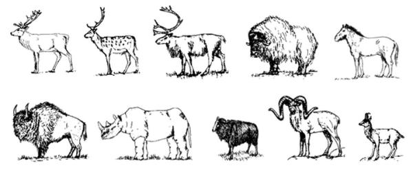 les grands herbivores de Tautavel
