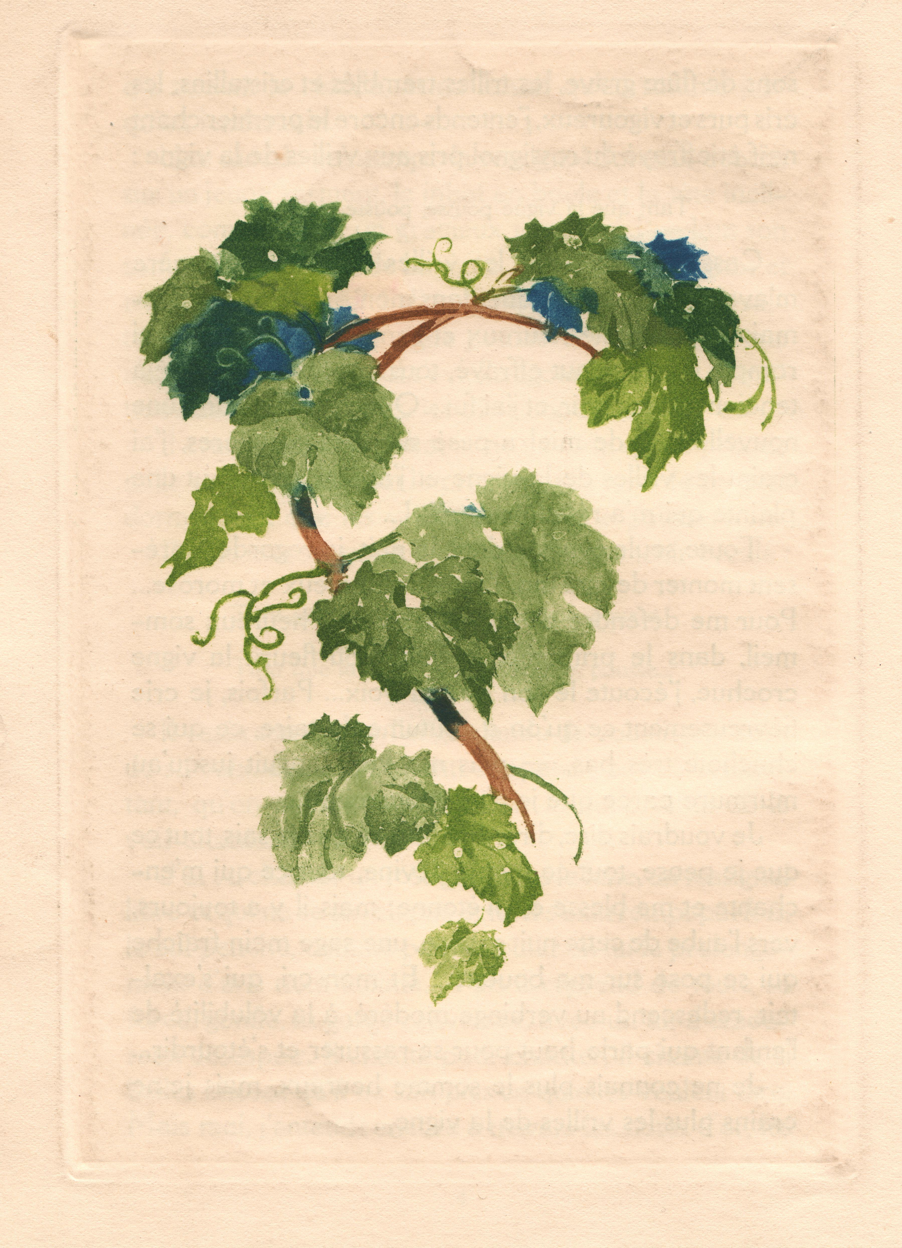 Vigne de paysage en paysage - Parasite de la vigne ...