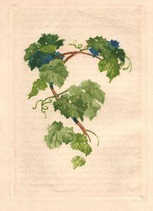 vrilles de la vigne par Lelong