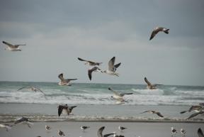 oiseaux en Baie d'Audierne - DSC_0331