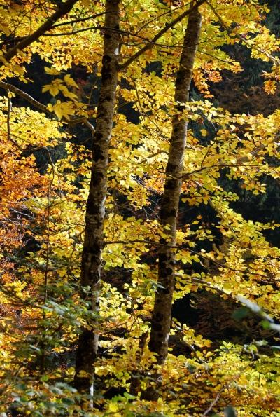 pluie d'or sur le massif des Bauges (DSC_0627)
