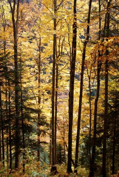 pluie d'or sur le massif des Bauges (DSC_0632)