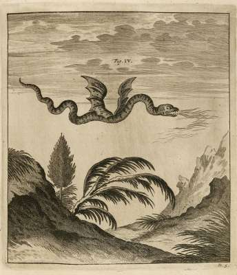 Dragon observé au mont Pilate –  Ouresiphoites Helveticus, sive itinera per Helvetiae alpinas regiones, 1723.