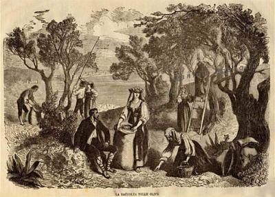 La récolte des olives, il Giornale illustrato 1864