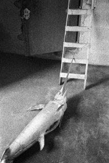 Franco Zecchin - Ustica, 1986 - Espadon dans un intérieur.