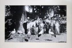 les cigognes d'Istamboul immortalisée par Pierre Loti
