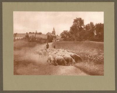 Retour du troupeau, 1905-Augustin Boutique