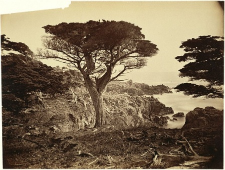 Carleton Watkins - Cypress Point, Monterey, 1880 (Collection du Musée J. Paul Getty)