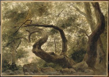 Pierre-Henri de Valenciennes - Sous-bois, arbre aux branches tortueuses