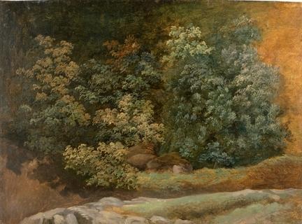 Pierre-Henri de Valenciennes - étude d'arbres et de buissons, date inconnue