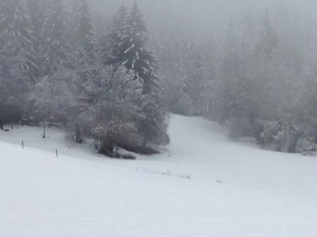 Graphisme d'hiver - col de Leschaux dans les Bauges - photo Enki le 16/02/2014 à 13h 09 (IMG_1612)