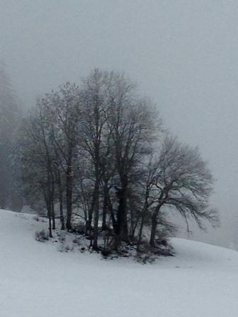 Graphisme d'hiver - col de Leschaux dans les Bauges - photo Enki le 16/02/2014 à 13h 09 (IMG_1616)