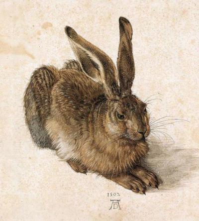 Albrecht Durer - jeune lièvre, 1502