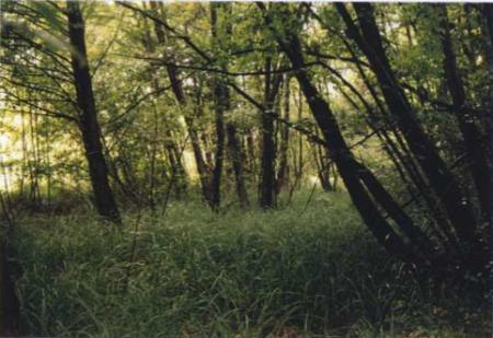Sillingy 74 - zone humide en bordure du ruisseau de Seysolaz