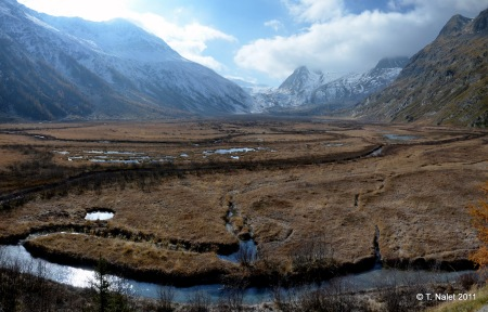 pelouse alpine humide du lac Combal dans le val Veny (Massif du mont Blanc)