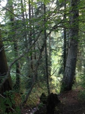 En route vers le Col des Nantets, ravin en forêt (IMG_4168) - photo Enki