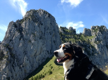 Gracie admirant le paysage - IMG_4474