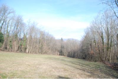 parcelle longue et étroite entourée d'arbres à POISY 74330 : une Resse
