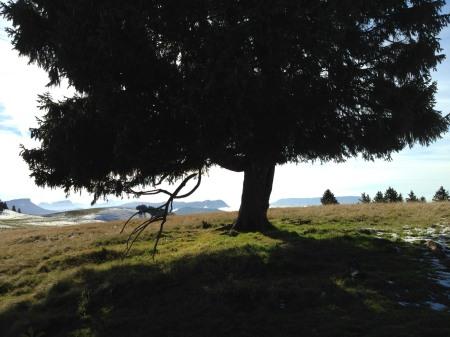 Sur le plateau du Semnoz - IMG_5711