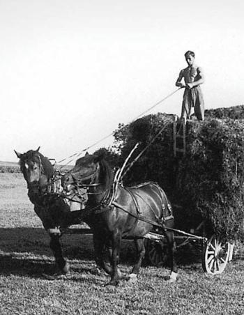 Gustave Roud Les foins,  Terre d'ombres, 1915-1965 itinéraire photographique de G. Roud , éditions Slatkine (2002) - détail