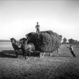 Gustave Roud Les foins, Terre d'ombres, 1915-1965 itinéraire photographique de G. Roud , éditions Slatkine (2002)