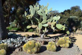 Arizona_Cactus_Garden_at_Stanford_University_4
