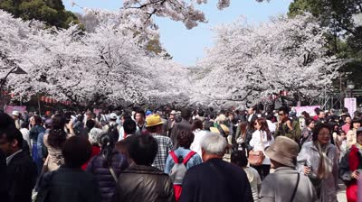 stock-footage-tokyo-japan-circa-april-people-holidays-cherry-blossom-ueno-park-crowd-and-tourists