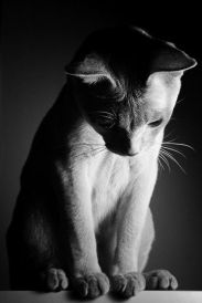 i-Wish-I-Could-Write-As-Mysterious-As-A-Cat.-edgar-Allan-Poe