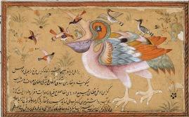 livre-d-art-cantique-des-oiseaux-pelican