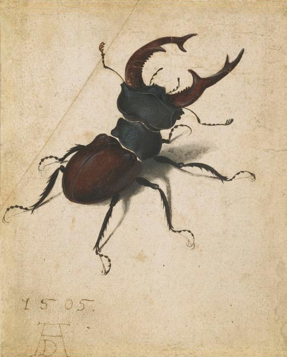 Albrecht Dürer - Le Lucane cerf-volant, 1505