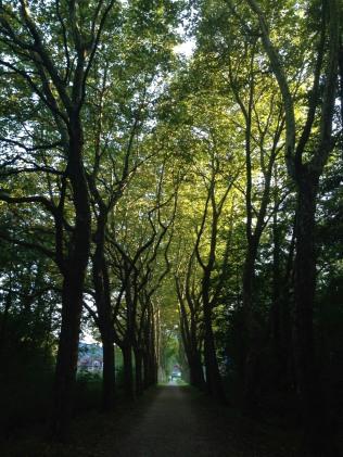l'allée des platanes (photo Enki, IMG_0463)