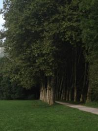 l'allée des platanes (photo Enki - IMG_0682)
