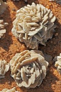 roses des sables