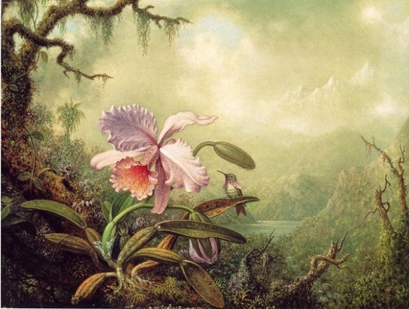 Heliodore's Woodstar and a Pink Orchid - circa 1875-1890 - oil on canvas by Martin Johnson Heade (1819-1904) - via The Athenaeum