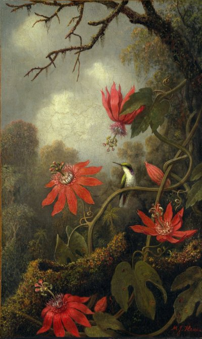 Martin Johnson Heade - Hummingbird et Passiflores (1875-1885) via Le Metropolitan Museum of Art