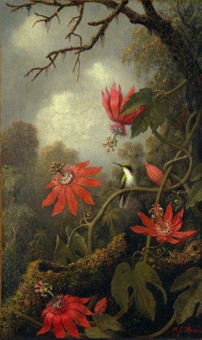 Martin Johnson Heade - Hummingbird et Passiflores (1875-1885) via Le Metropolitan Museum of Art