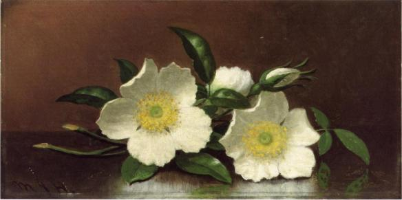 Two_Cherokee_Rose_Blossoms_on_a_Table_%2F_Cherokee_Roses