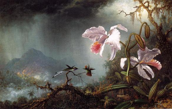Two_Fighting_Hummingbirds_with_Two_Orchids