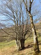 Bellecombe-en-Bauges - hameau de Mont Derrière (IMG_3145)