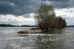 le Rhein à Winkel