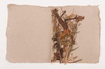 plantes séchées issues de l'herbier de Rousseau. Bibliothèque publique et universitaire, Neuchâtel : Photo Gaël Osowiecki