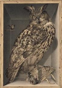 Alexandre-Isidore-Leroy-de-BardeOiseaux-exotiquesXVIIIème-détail