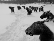 Les chevaux du lac Ladoga - Malaparte