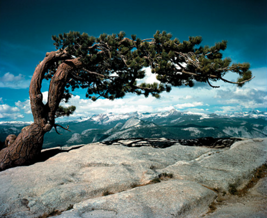 Ansel Adams - Jeffrey Pine on Sentinel Dome, Yosemite National park, 1948.png