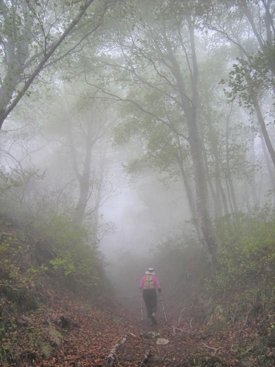 FSCN9247-han-fog-1