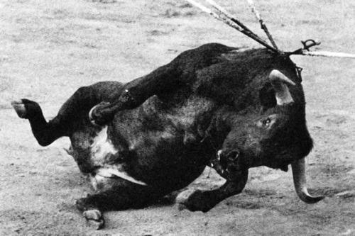 Photo Fernando Botan Castillo. La mort du toro brave