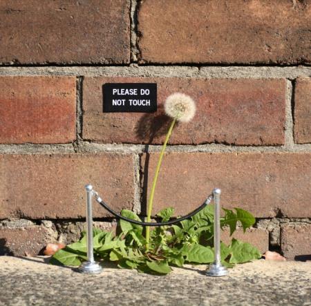 sign-flower.jpg